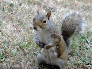 squirrel-1921417 1920